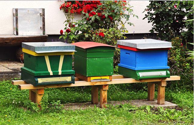 des ruches dans le jardin d 39 un restaurant buzz toi. Black Bedroom Furniture Sets. Home Design Ideas